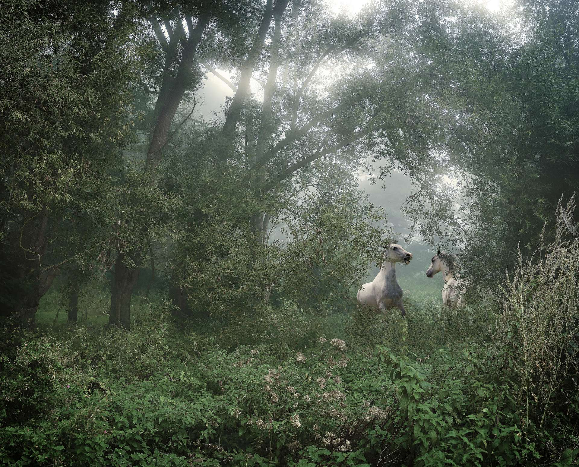 Horses in the mist. | Landscape | Koen De Muynck